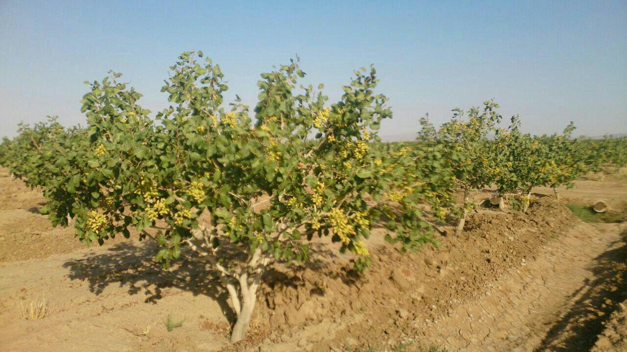 The need to set up a meteorological station in the pistachio-rich areas of Kerman